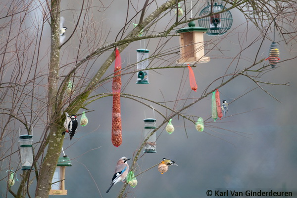 Vogels voeren ; Bird feeders
